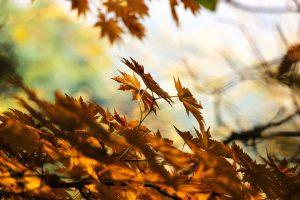 Herbstzeit-Erkältungszeit